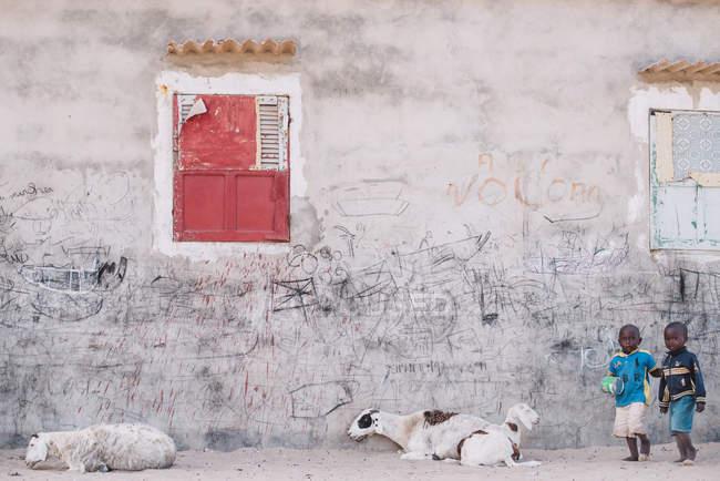 Yoff, Senegal- 6 dicembre 2017: Due ragazzi con palla che camminano sulla strada vicino al muro di cemento sporco e tre capre . — Foto stock