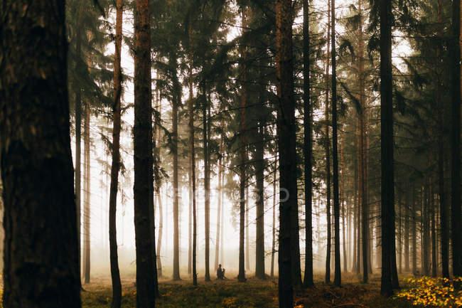 Vista de viajero sentado en el suelo en bosque de niebla oscura - foto de stock