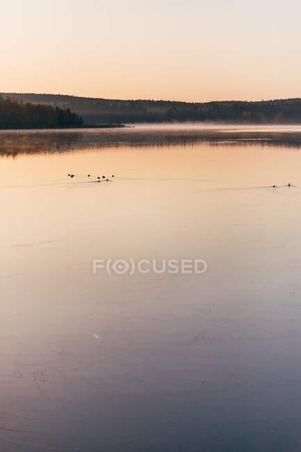 Paisaje de bruma de la mañana en la superficie del lago con patos para nadar pacíficamente. - foto de stock