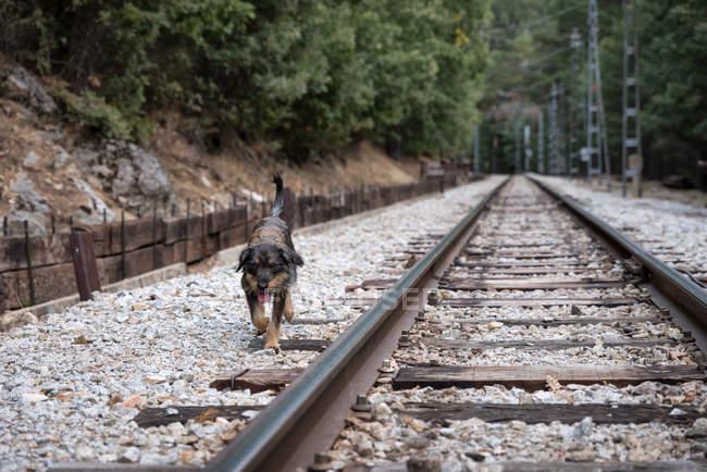 Бездомний собака симпатичної Блукаючи по композиції поїзда — стокове фото