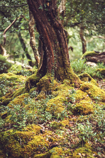 Colorful tree trunk growing on mossy ground — Stock Photo