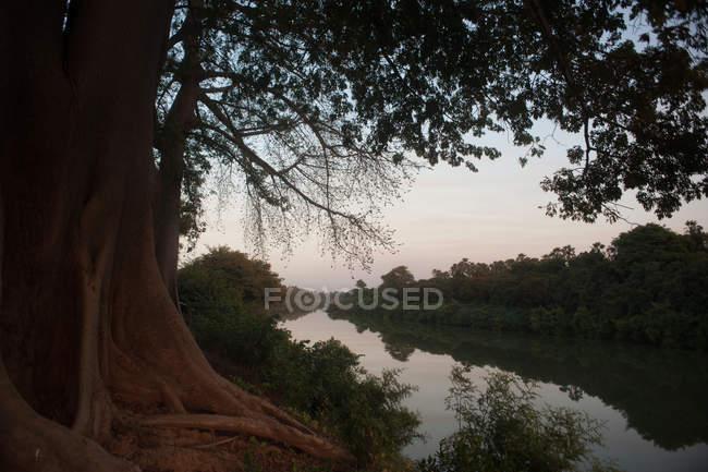Краєвид дерев, що ростуть на березі ріки тропічних з спокійні води у сутінках. — стокове фото