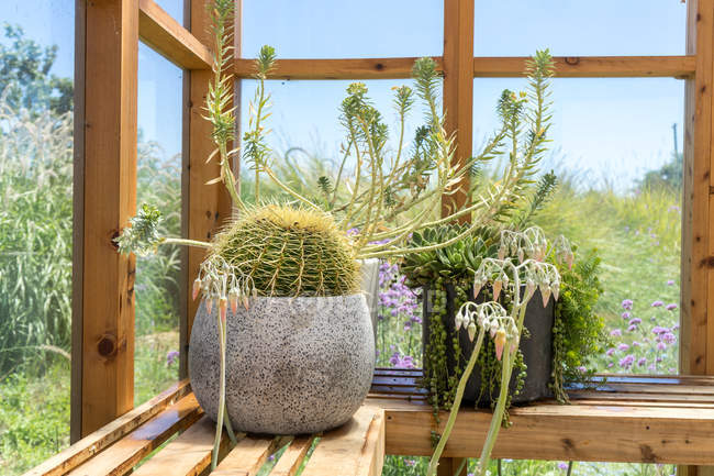 Potted cactus with spikes on wooden bench — Stock Photo