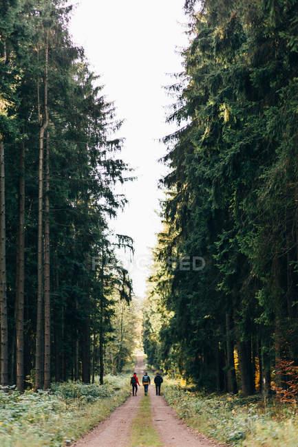 Вид сзади туристов прогулки по сельской дороге в вечнозеленые леса с высокими деревьями, рядом с — стоковое фото