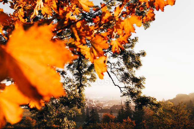 Close up of colorful autumnal foliage on background of cityscape. — Stock Photo