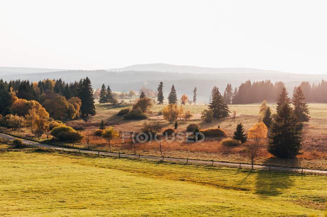 Malerische Landschaft der herbstlichen Bäume im Land im morgendlichen Sonnenlicht — Stockfoto