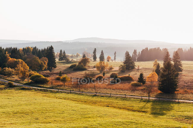 Picturesque landscape of autumnal trees at countryside in morning sunlight. — Stock Photo