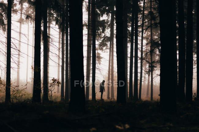 Silueta del hombre en el brumoso bosque oscuro - foto de stock