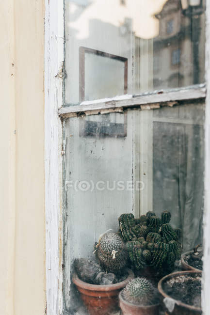 Exterior shot of old window with dirty glass and cactus on sill behind. — Stock Photo