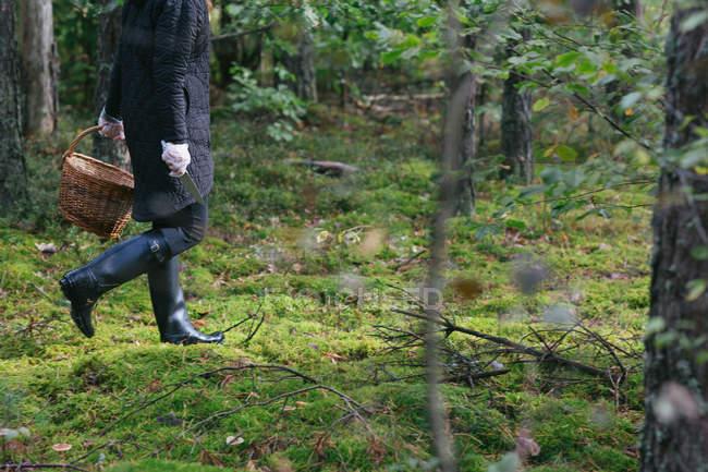 Mulher de colheita com cesto coleta de cogumelos na floresta — Fotografia de Stock