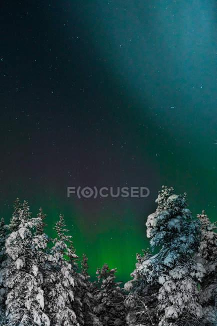 Vue du bas sur les bois couverts de neige sous le ciel avec lumière polaire . — Photo de stock