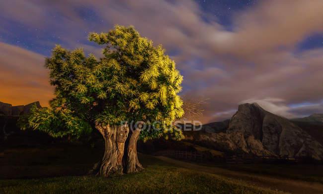 Vista para a árvore verde ao anoitecer — Fotografia de Stock