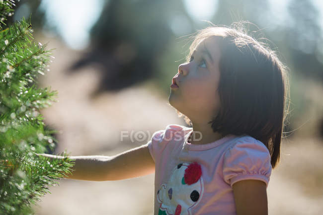 Side view of little girl standing at big fir tree and looking up in sunny forest. — Stock Photo