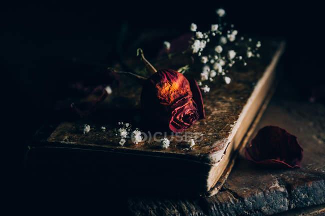 Vue rapprochée de roses séchées et de petites fleurs blanches sur un vieux livre — Photo de stock