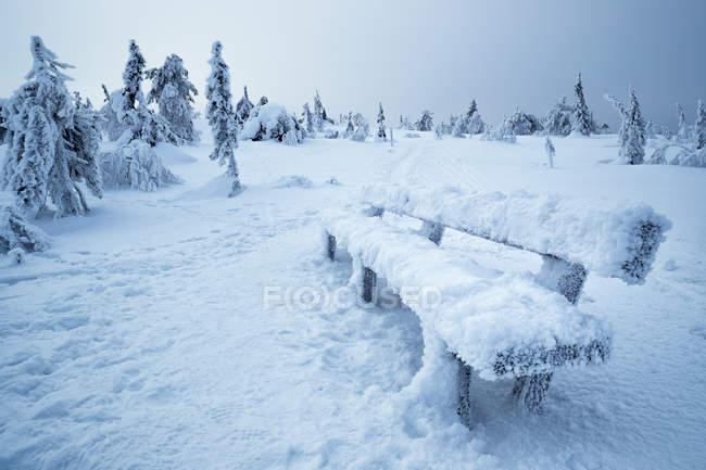 Крупным планом вид небольшой филиал, покрыты снега и льда в зимний лес — стоковое фото