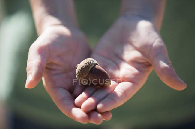 Crop hands holding acorn in sunlight — Stock Photo