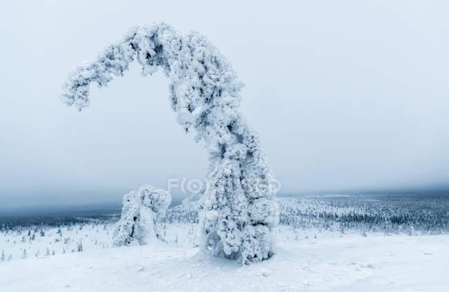 Vue sur les plantes gelées dans le paysage hivernal — Photo de stock