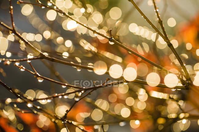 Branches avec des gouttes d'eau dans la lumière du soleil — Photo de stock