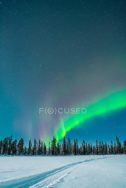 Bois d'hiver et lumière polaire dans le ciel — Photo de stock