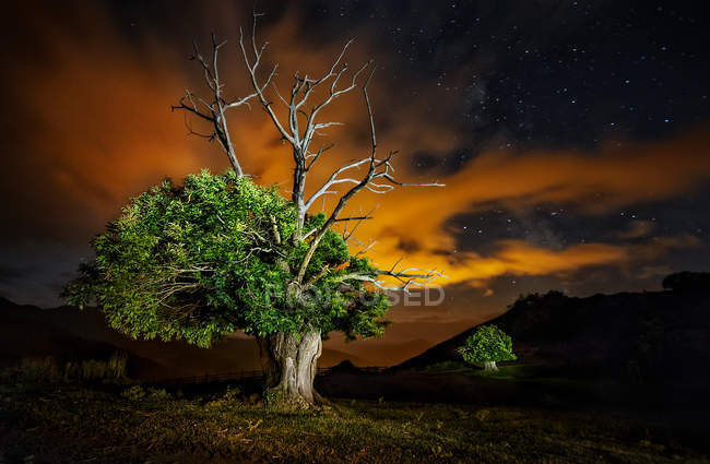 View to big green tree under cloudy dusk sky in nature scene — Stock Photo