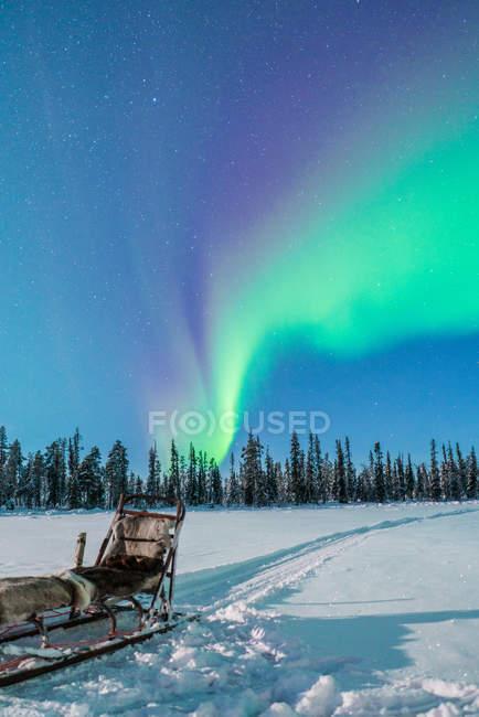 Faire de la luge en forêt d'hiver sur fond d'aurores boréales dans le ciel — Photo de stock
