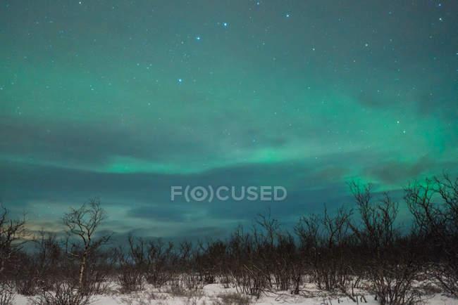 Nordlicht über Winterwald in der Nacht — Stockfoto