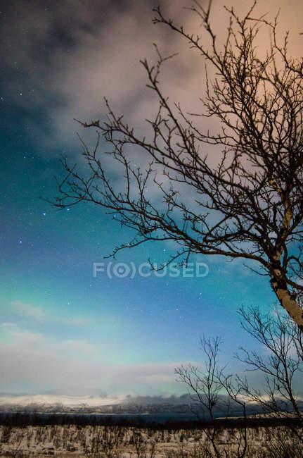 Vue grand angle arbre effeuillé et neigeuse nature dans la forêt d'hiver pendant la nuit. — Photo de stock