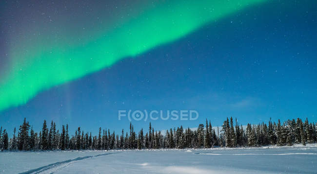 Bosco del nord di notte sotto cielo con northern lights — Foto stock