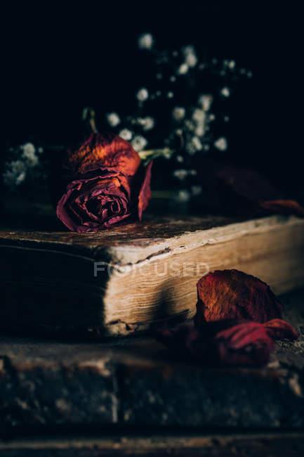 Close-up vista de rosa seca e pequenas flores brancas no livro velho na mesa de madeira rural — Fotografia de Stock