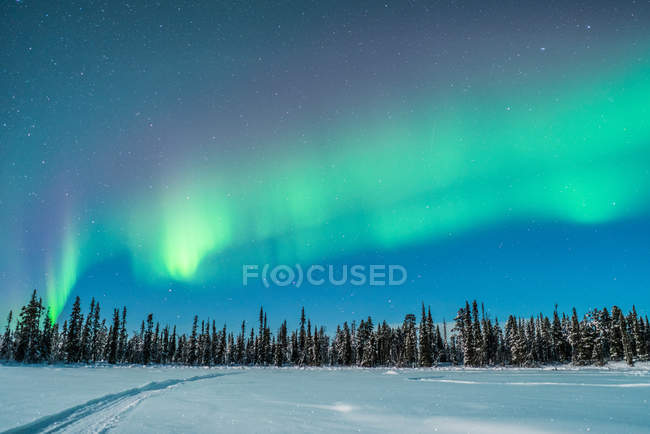 Landscape view to winter frost woods and cloudless sky under Polar light. — Stock Photo