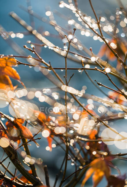Full frame shot of sunlit branches with water drops — Stock Photo