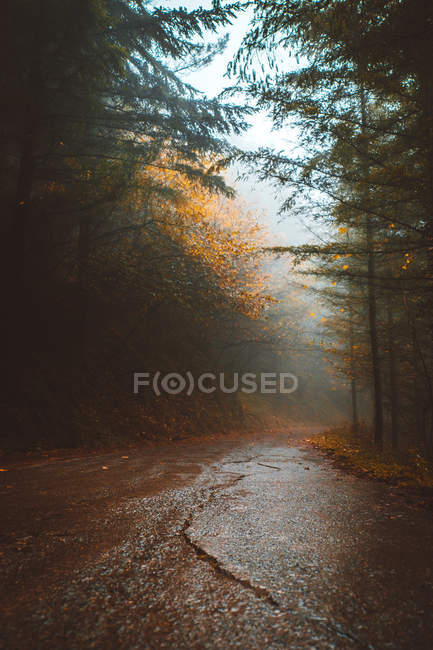 Surface level view of wet asphalt road in foggy forest — Stock Photo