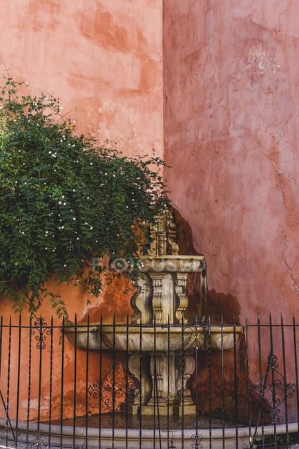 Багато прикрашений фонтан на куті рожевий Плющ обняв стін — стокове фото