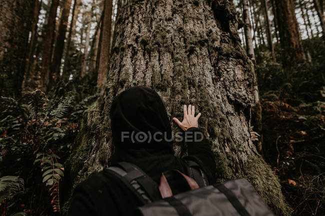 Back view of tourist person standing in woods and touching trunk. — Stock Photo