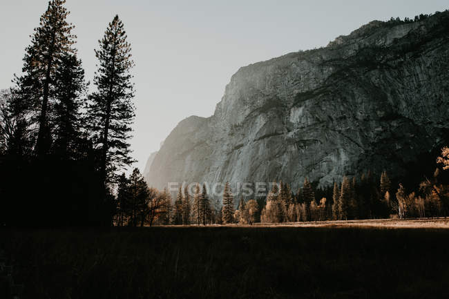 Idyllic view to sunny mountain meadow and forest — Stock Photo