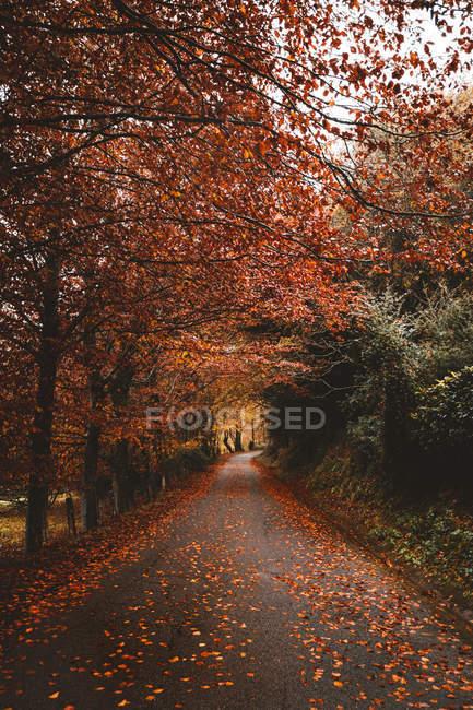 Перспективный вид на загородную дорогу в красном осеннем лесу . — стоковое фото
