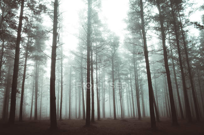 High angle view to autumn woods growing in misty forest. — Stock Photo