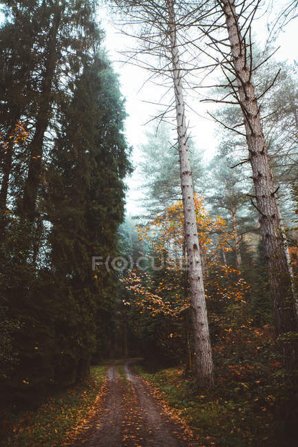 View to country road with fallen foliage in forest in autumn season. — Stock Photo