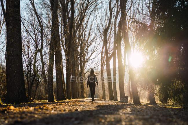 Задній вид Жінка вигулює autumnal алея — стокове фото