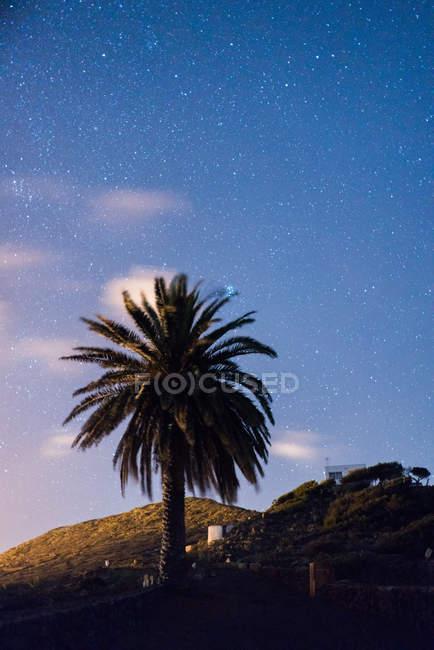 Дерево пальми, на схилі гори на фоні зоряного неба — стокове фото