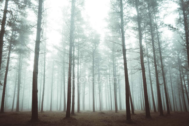 Scenic view to woods in foggy forest — Stock Photo