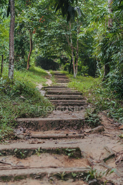 Stairs and small path in green tropical forest. — Stock Photo