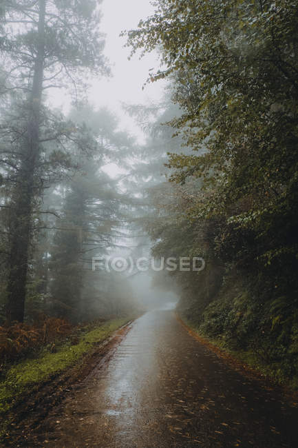 Estrada de asfalto enevoado na floresta de outono — Fotografia de Stock
