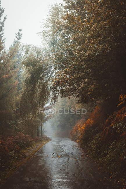 Vue idyllique de la route asphaltée dans la forêt pluvieuse d'automne . — Photo de stock