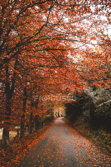 Autumn red trees over asphalt road at countryside — Stock Photo