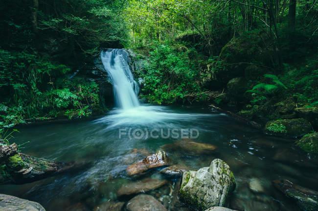 Вид на идиллический водопад внутри леса — стоковое фото