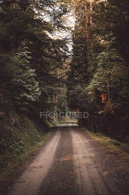 Перспективный вид на сельскую дорогу в тихом зеленом лесу . — стоковое фото