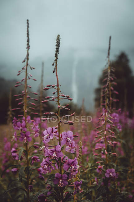 Small purple flowers blooming on autumn field in nature. — Stock Photo