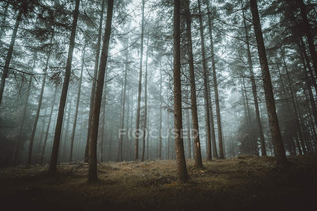 View to misty autumn forest in morning. — Stock Photo