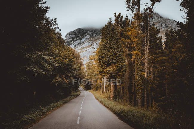 Diminishing view of road running away in woods — Stock Photo